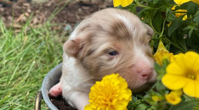 We have puppies…