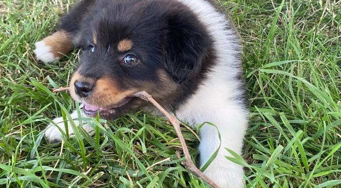 Last puppy has been sold